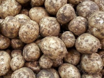 Boston New Potatoes