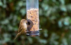 No.1 Wild Bird Seed